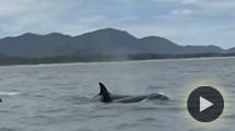 orcassc.jpg