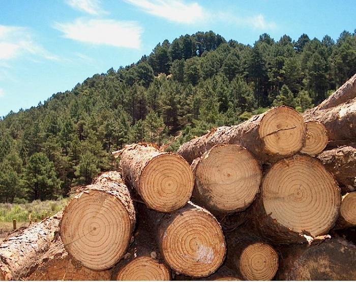 PalavraLivre-produtos-florestais-sc-silvicultura.jpg
