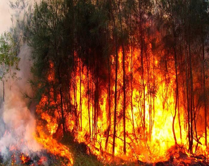 incendio florestal.png