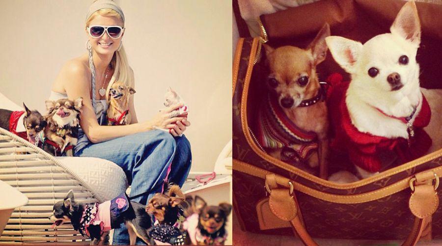 Bolsa De Transporte Para Cães Louis Vuitton : Paris hilton mostra c?es em bolsa de grife famosos
