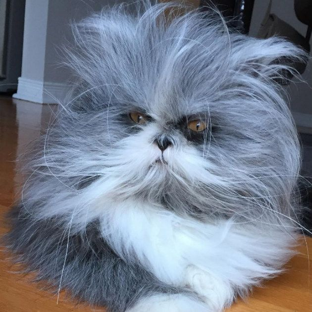Cão Ou Gato: Pet Misterioso Intriga Internautas