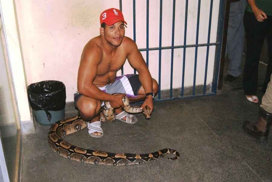 Vigilante é detido com jiboia de estimação na Bahia